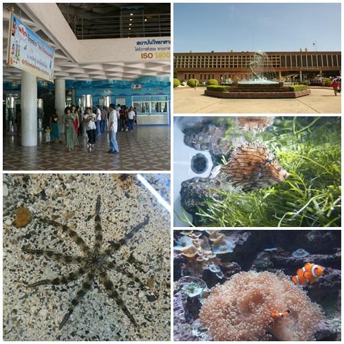 สถาบันวิทยาศาสตร์ทางทะเล